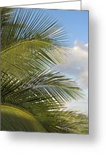 Palm Close Up 3 Greeting Card