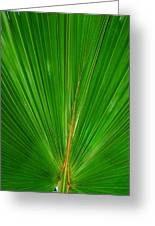 Palm Closeup Greeting Card