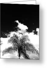 Palm Cloud  Greeting Card