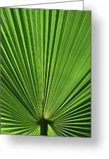 Palm Fan Design Greeting Card