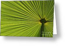 Palm Fron Abstract Greeting Card