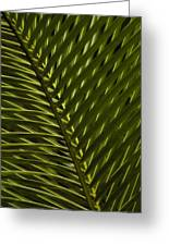 Palm Frond Patterns Greeting Card