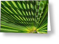 Palm Frond Greeting Card