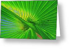 Palm Frond Work A Greeting Card