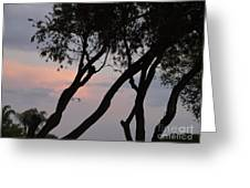 Palm Haven Greeting Card