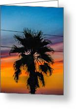 Palm In The Sunset Greeting Card