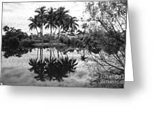 Palm Island  Greeting Card