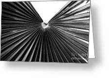 Palm Leaf 6684bw Greeting Card