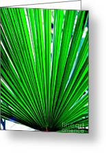 Palm Leaf 6687 Greeting Card