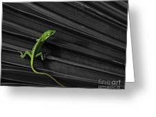 Palm Leaf Lizard Greeting Card