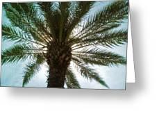 Palm Light Greeting Card