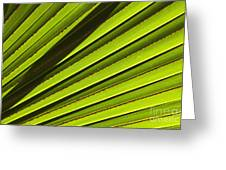 Palm Lines Greeting Card