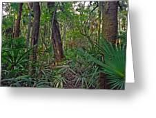 Palm Menagerie. Highlands Hammock. Greeting Card