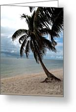 Palm On The Beach Greeting Card