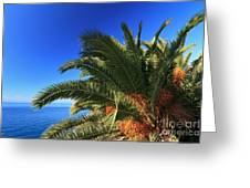 Palm Over The Sea Greeting Card