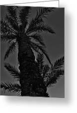 Palm Reader Greeting Card by Tara Miller