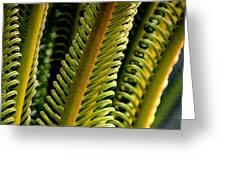 Palm Reading Greeting Card
