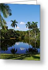 Palm Reflection And Shadow Greeting Card