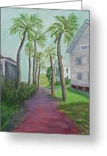 Palm Row In St. Augustine Florida Greeting Card