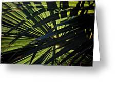 Palm Shadows Greeting Card