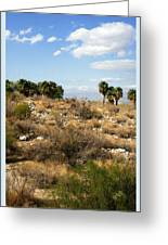 Palm Springs Indian Canyons View  Greeting Card