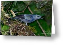 Palm Tanager Greeting Card