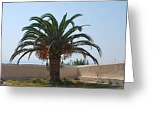 Palm Tree 3 Greeting Card