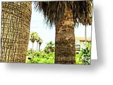 Palm Tree 7 Greeting Card