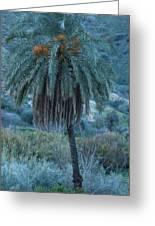 Palm Tree  Almanzora Mountain Spain  Greeting Card