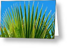 Palm Tree And Blue Sky 2/06 Greeting Card
