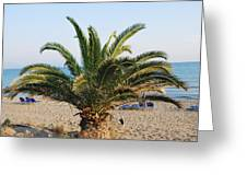 Palm Tree By The Beach Greeting Card