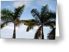 Palm Tree In Costa Rica Greeting Card