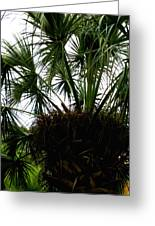Palm Tree In Curacao Greeting Card