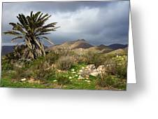 Palm Tree In Storm Greeting Card