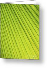 Palm Tree Leaf Abstract Greeting Card