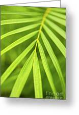 Palm Tree Leaf Greeting Card by Elena Elisseeva