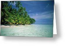 Palm Tree Lined Beach Papua New Guinea Greeting Card