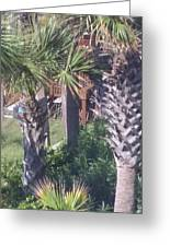 Palm Tree Scenery Greeting Card