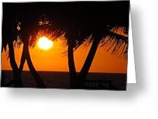 Palm Tree Silhouette At Sunset Greeting Card