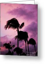 Palm Tree Silhouettes At Dusk In Aruba Greeting Card
