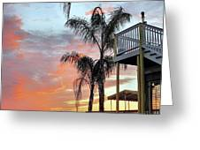 Palm Tree Sunrise  In New England Greeting Card