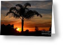 Palm Tree Sunset Greeting Card