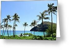 Palm Trees Along The Coast Of Waimanalo Greeting Card