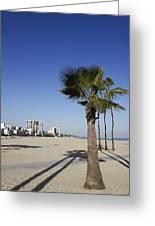 Palm Trees At Long Beach California Greeting Card