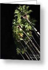 Palm Trees At Night Greeting Card