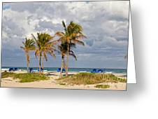 Palm Trees At The Beach Greeting Card