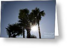 Palm Trees In Backlit Greeting Card