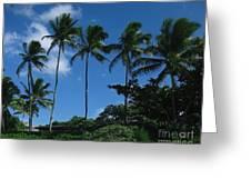 Palm Trees In Hawaii Greeting Card