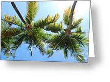 Palm Trees In Puerto Rico Greeting Card