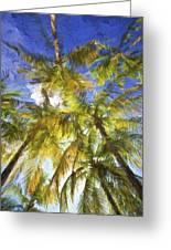 Palm Trees Of Aruba Greeting Card